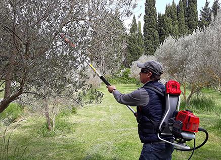 Vibreur thermique à crochet pour la récolte des olives